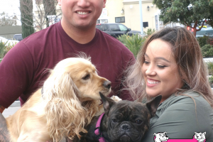 Harley the Cocker Spaniel and Bradly the French Bulldog Visited us in Tracy
