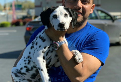 Oreo the Dalmatian visited us in Antioch