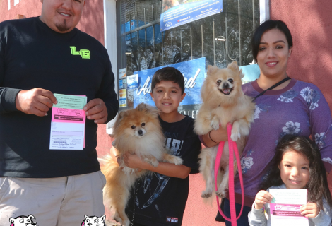 Pomeranians Opi and Coc visit us in Fairfield