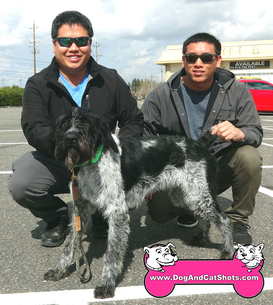 We saw a German Wirehaired Pointer at our Rancho Cordova Clinic