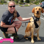 11-rocklin-yellow-labrador-took-puppy-picture-too-now-1-year-old-jack