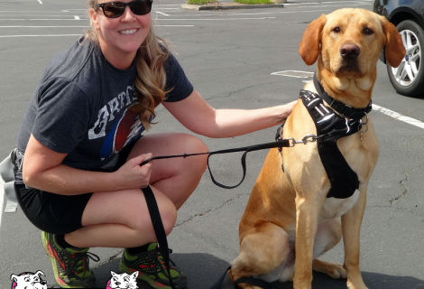 Jack the Golden Labrador Retriever came to our Rocklin clinic
