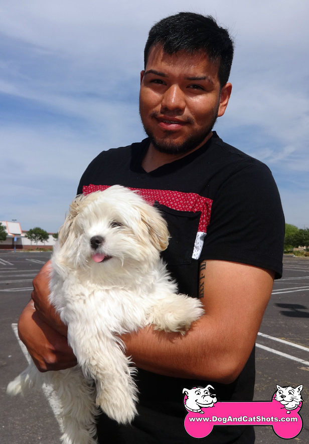Breeze the Poodle / Shih-Tzu mix visited us in Modesto
