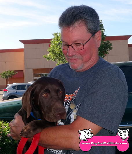 Copper the Chocolate Lab came to our Stockton clinic