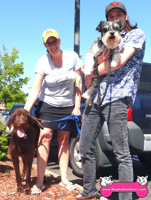 Radar the German Wirehair Pointer and Ziggy the Miniature Schnauzer visited us in Placerville