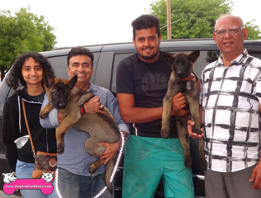 Isha and Raaja are two mixed breed pups who visited us in Modesto