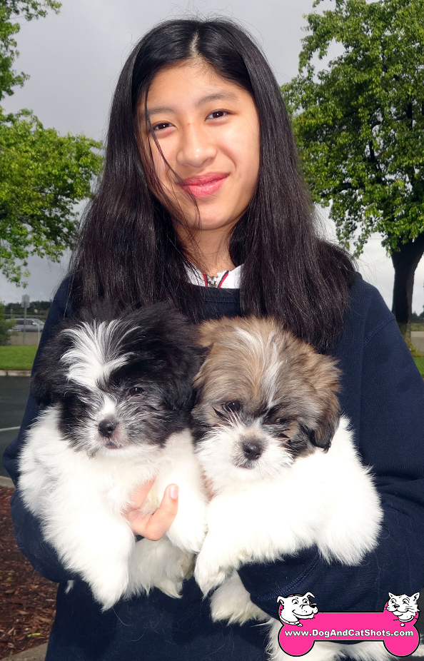 Boo and Wally the Shih-Tzu pups came to our Vallejo clinic