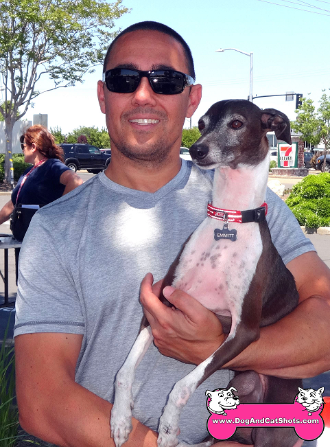 12-rocklin-italian-greyhound-emmit