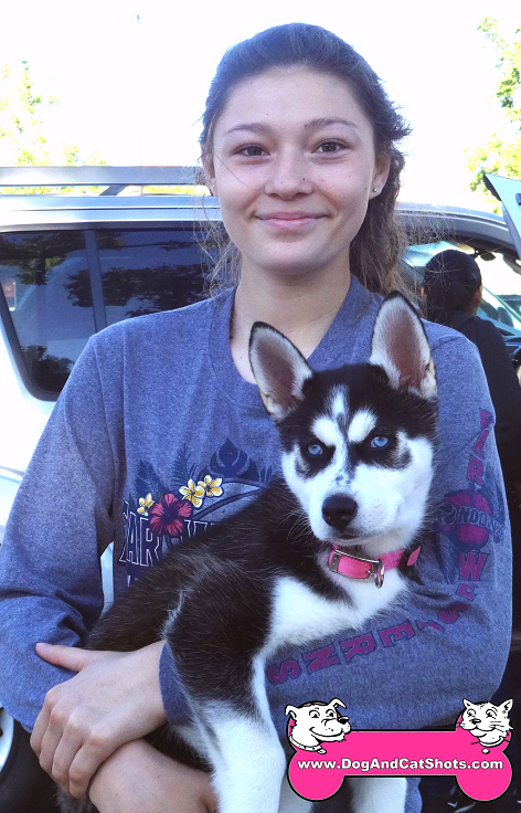Maya the Siberian Husky came to our Elk Grove clinic