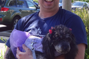 Plumb the Poodle Mix visited us in Folsom