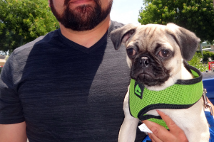 Duffy the Pug came to our Ceres clinic