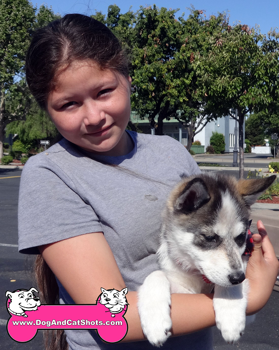 Panda the Siberian Husky came to our Pittsburg clinic