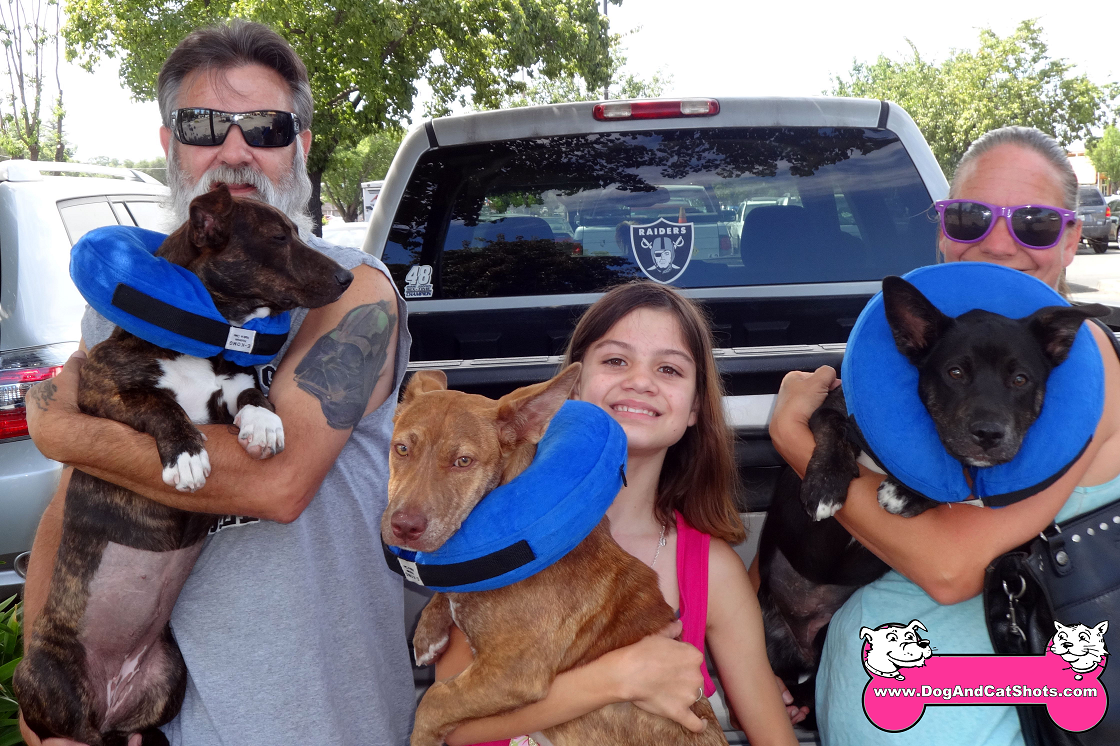Leia, Brindle and Ziya came to our Roseville clinic