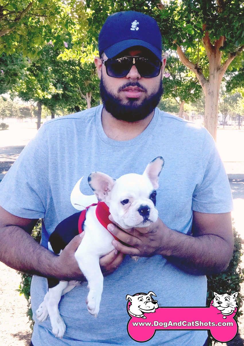Guapo the French Bulldog came to our Stockton clinic