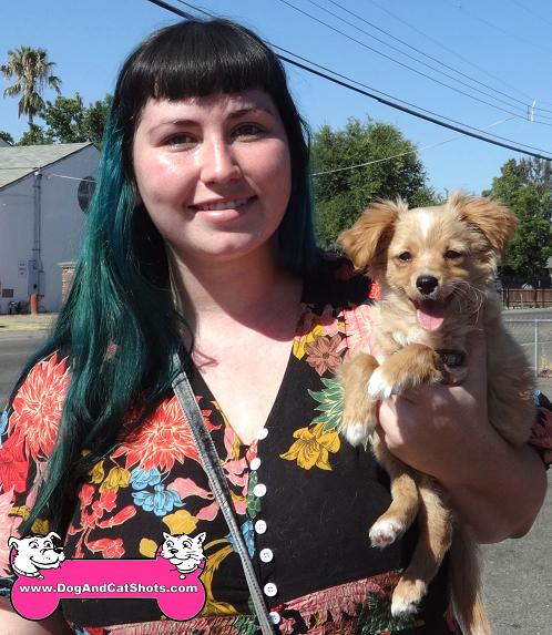 Harpo the Chihuahua mix came to our South Sacramento clinic
