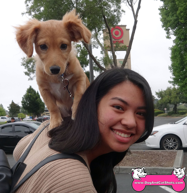 Venus the mixed puppy visited us in Vallejo