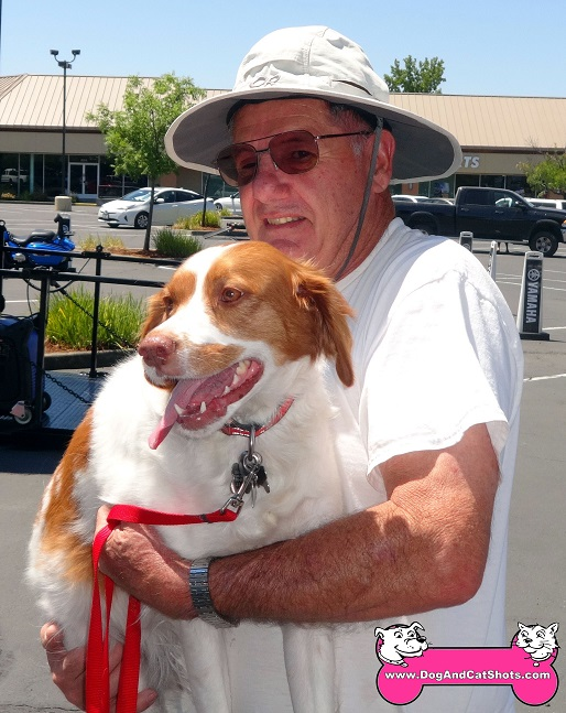 Samantha the Brittany Spaniel came to our Roseville clinic