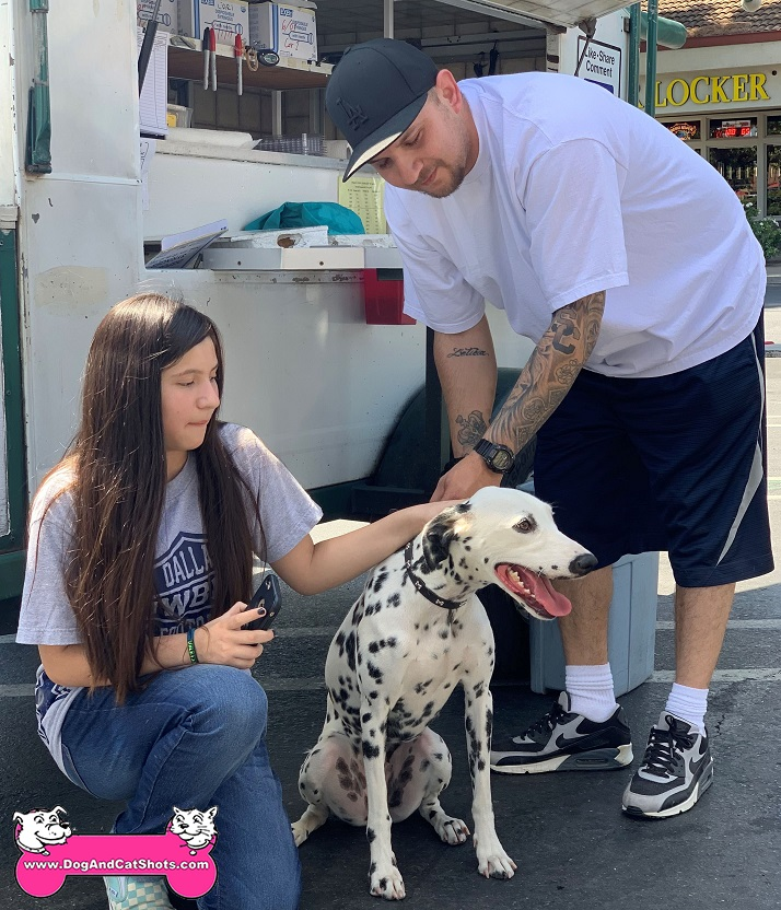 Penny the Dalmatian came to our Modesto clinic
