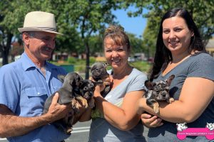 French Bulldog puppies available in Vacaville!