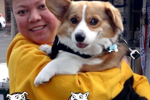 Oreo the Pembroke Welsh Corgi at our Vallejo American Canyon Vaccination Clinic