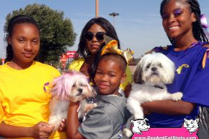Well Groomed and Decorated Shih-Tzus at our Ceres Vaccination Clinic
