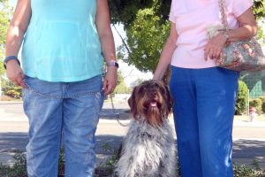 A German Wirehaire Pointer Visited Our Pet Vaccination Clinic in the Freeport area of Sacramento