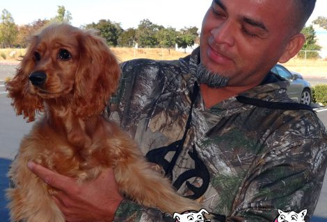 Billie, a Cocker Spaniel at our Antioch clinic.