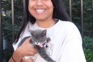 Nani, a Grey Tabby Kitten in Turlock.