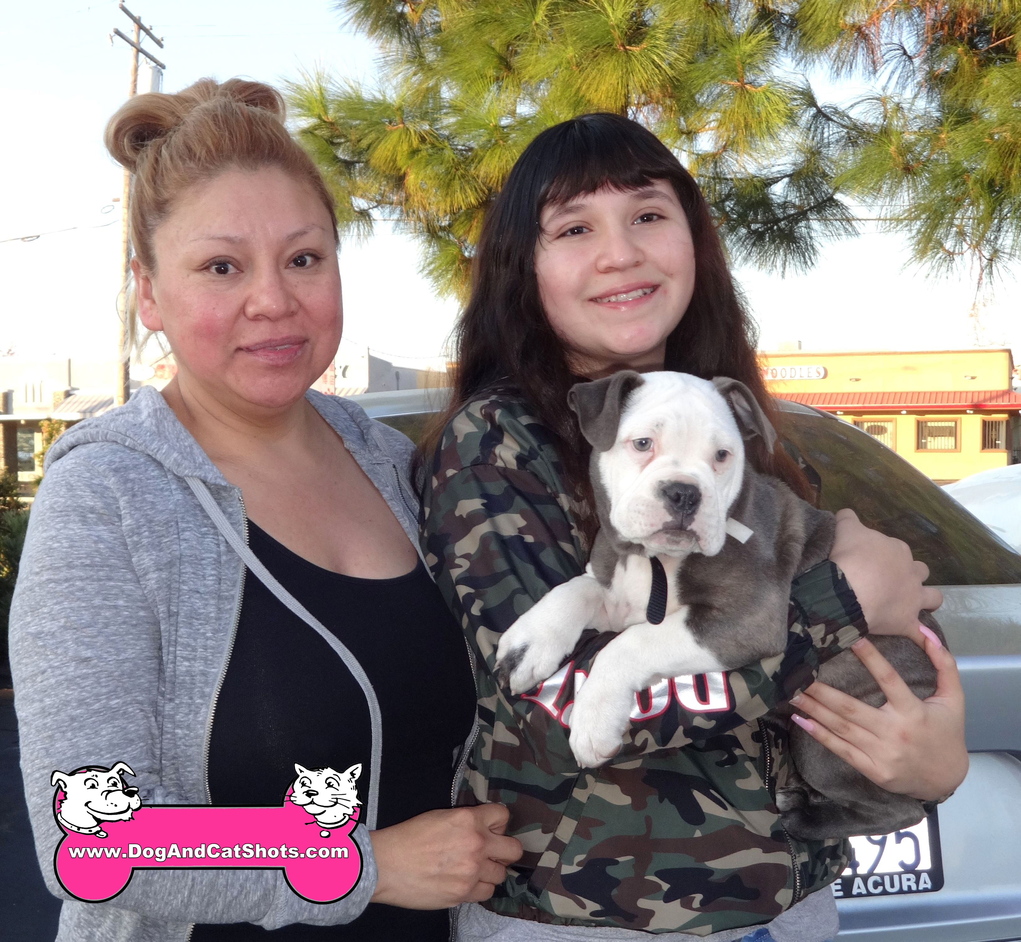 Cleo the Young Pitbull in Sacramento