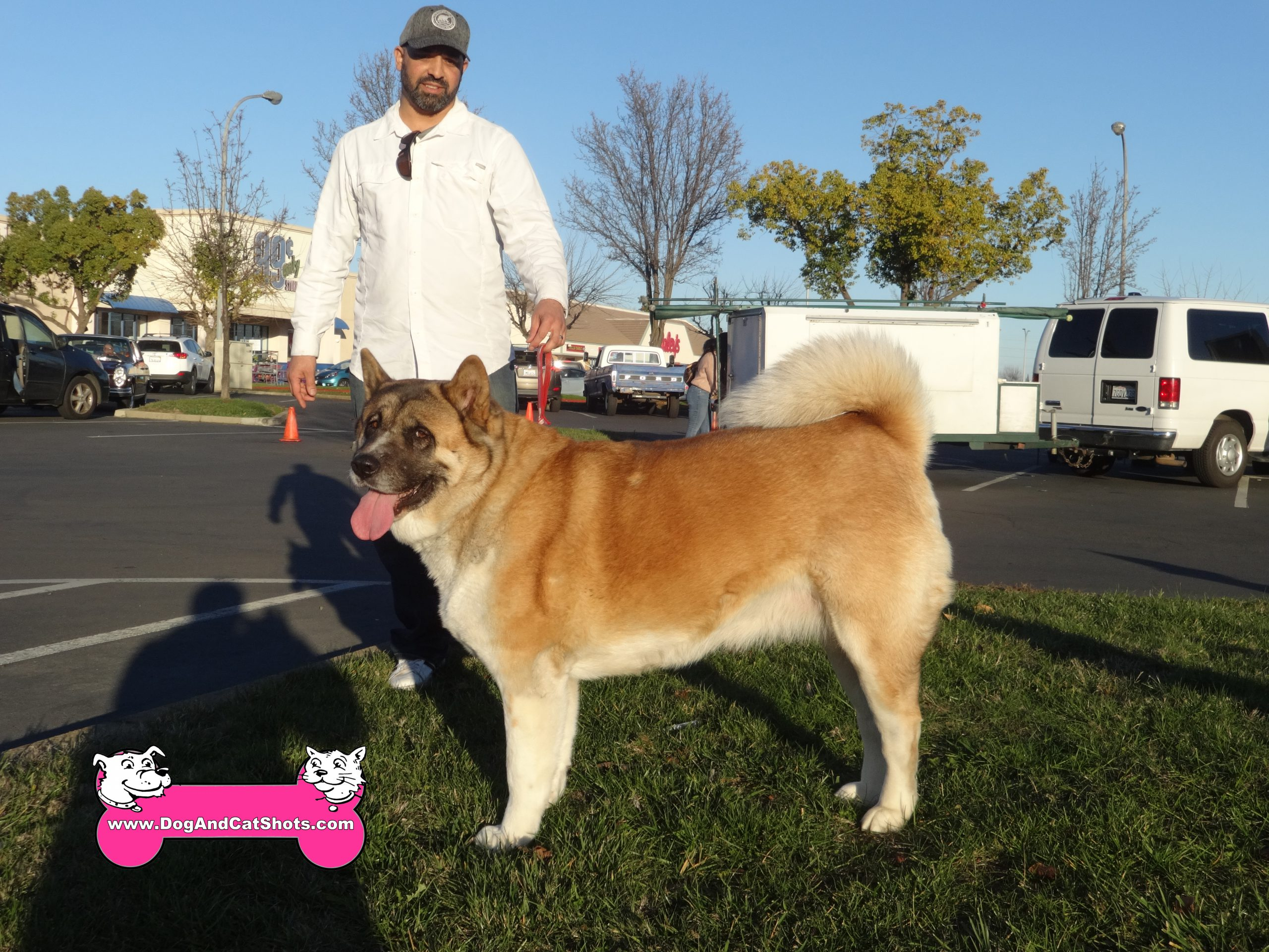 Ginger, the Akita, coming into our Sacramento, College Greens clinic.