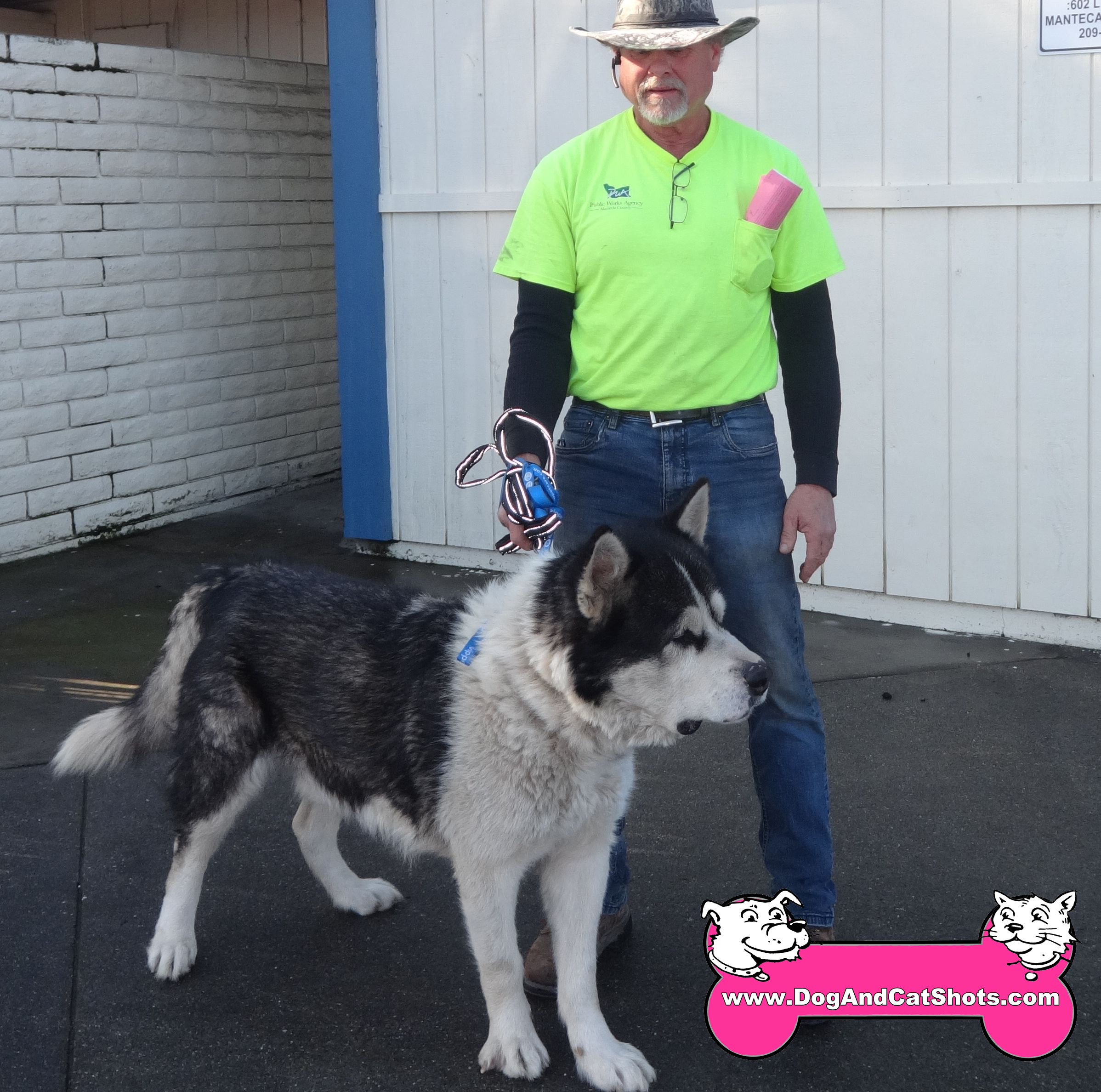 Brutus the Malamute at our Manteca Clinic.