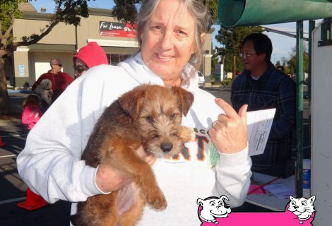 Madigan, a young Wire Terrier who came to our Vacaville / Fairfield Clinic.