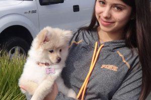 Scarlett the Pomeranian at our Roseville/Rocklin Clinic