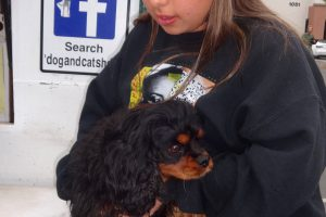 O.J. A King Charles Spaniel that came into our Dixon Clinic