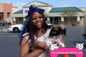 Destiny the Pekingese 'Lion Dog'