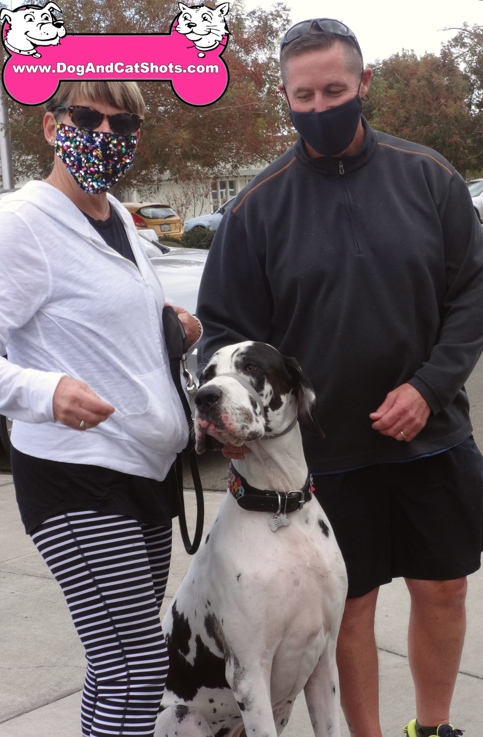 Olive the Great Dane at our Tracy Clinic