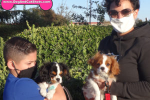 A Perfect Pair of King Charles Spaniels