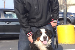 Max the Bernese Mountain Dog
