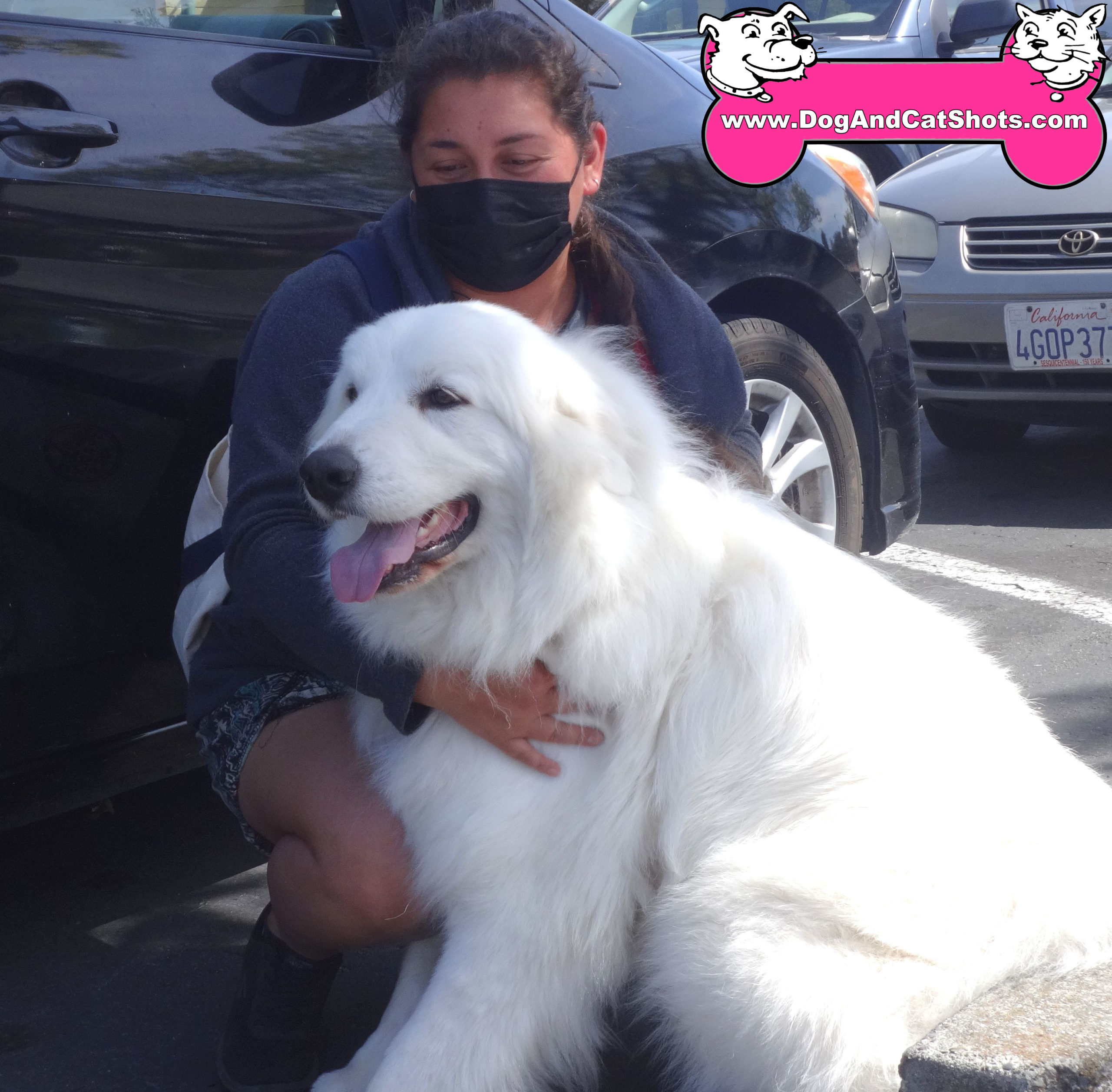 Clara the Great Pyrenees at our Solano Clinic